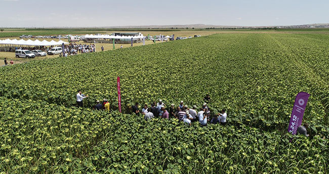 Bilinçli tarım Konya Ovasında verimi yükseltti