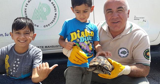 Konya'da yaralı kaplumbağa tedaviye alındı