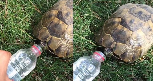 Dünyayı iyilik kurtaracak! Sıcaktan bunalan kaplumbağaya su içirdi