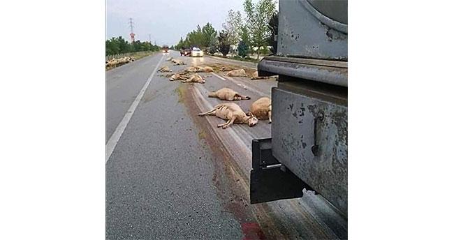 Konya'da kamyon koyun sürüsüne daldı