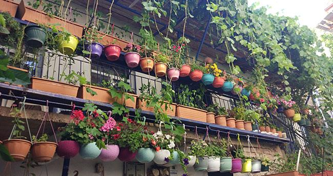 Konya'da yaşayan yazlıkçının çiçekleri ziyaretçi akınına uğruyor