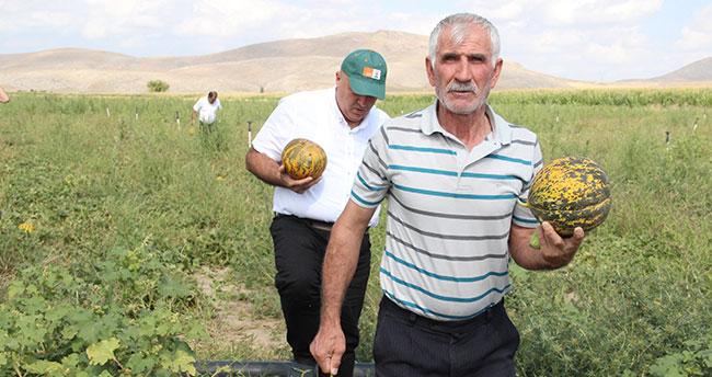 Karaman'da hasadı başlayan kavun üreticinin yüzünü güldürüyor