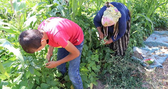 Aksaray'da üreticiler organik sebze ve meyvelerini satarak gelir elde ediyor
