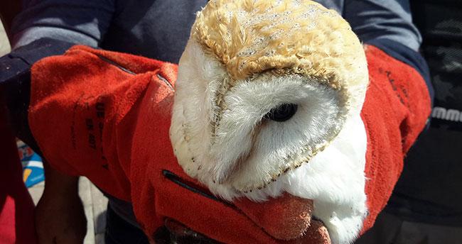 Konya'da yaralı peçeli baykuş tedavi altına alındı