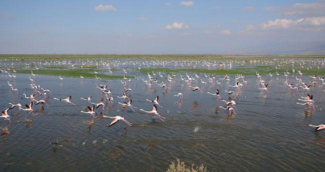 Konya'da rehabilite edilen gölet kuş sesleriyle şenleniyor