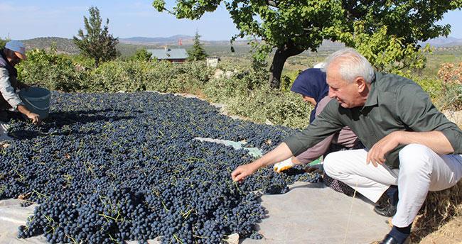 Bozkır'da üzüm hasadı başladı