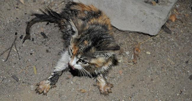 Konya'da kuyuya düşen yavru kediyi itfaiye kurtardı