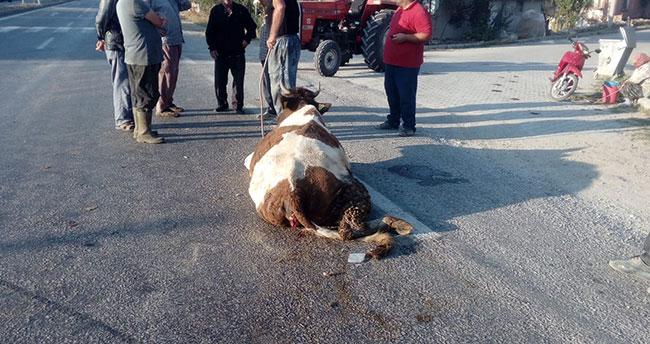 Konya'da hafriyat kamyonu yola çıkan ineğe çarptı