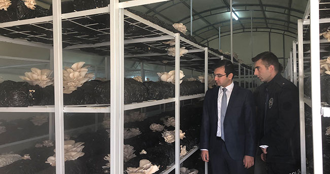 Kaymakam Taşkıran mantar üretim tesisini inceledi