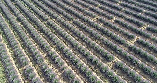 Hazine arazileri çiftçilere kiraya verilecek