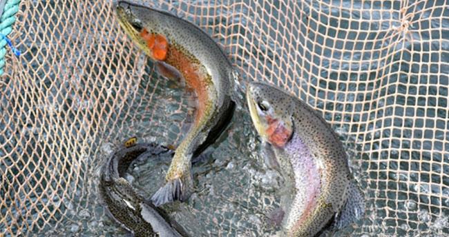 Dikkat! Doğal alabalık avlanma yasağı başladı