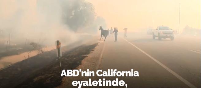 Orman yangınına aldırış etmeyen at, ailesinin yardımına koştu