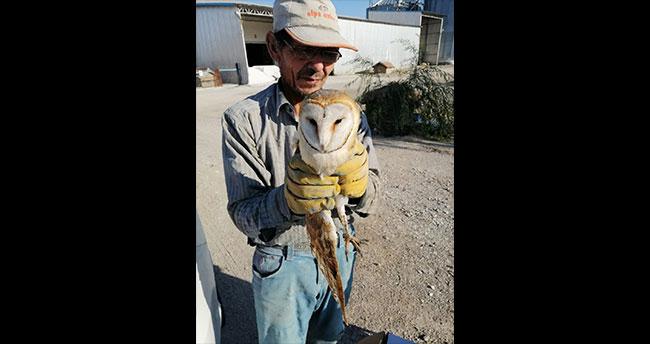 Konya'da yaralı halde bulunan peçeli baykuş tedavi altına alındı