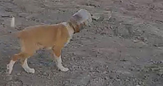 Konya'da başı plastik bidona sıkışan yavru köpeği vatandaş kurtardı