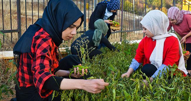 Konya'da üniversite öğrencilerinden örnek davranış! İhtiyaç sahipleri için de sebze yetiştiriyorlar
