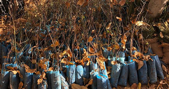 Hüyüklü üreticilere ücretsiz badem, ceviz ve ıhlamur fidanı dağıtıldı
