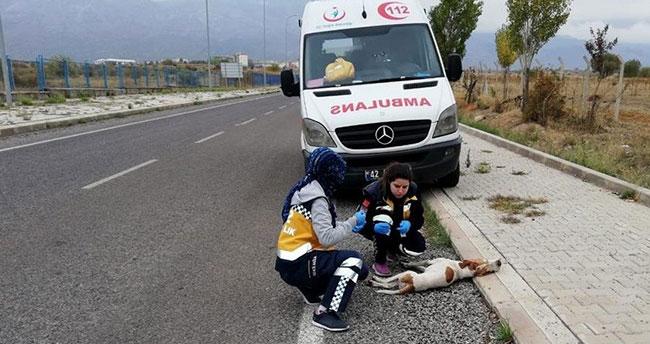 Konya'da 112 çalışanlarının kazada yaralanan köpeği yaşatma çabası