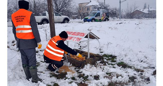 Akşehir Belediyesi hayvanları unutmadı