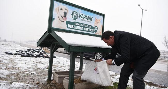 Karatay Belediyesi'nden sokak hayvanlarına yardım eli