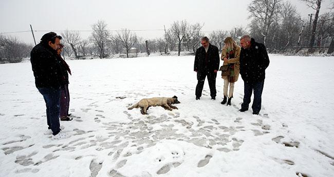 Konya'da hırsızlar çiftlikteki 6 köpeği öldürüp hayvanları çaldı!
