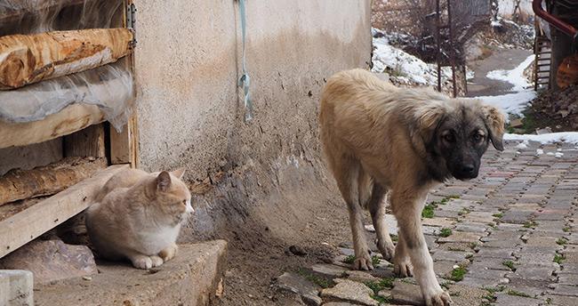 Konya Bozkır'da sokak ve yaban hayvanları kış aylarında aç kalmayacak