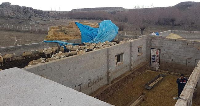 Aksaray'da etkili olan rüzgar mandıranın çatısını uçurdu
