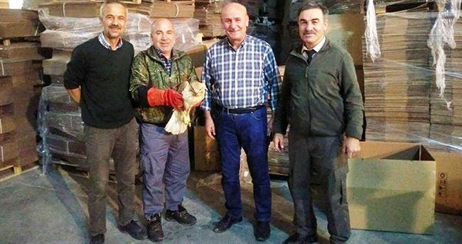 Konya'da uçamayan şahin tedaviye alındı