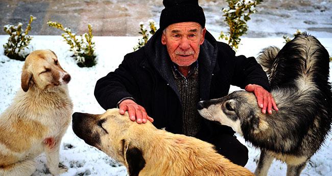 Konya'da yaşlı adamın sahipsiz köpeklere şefkati