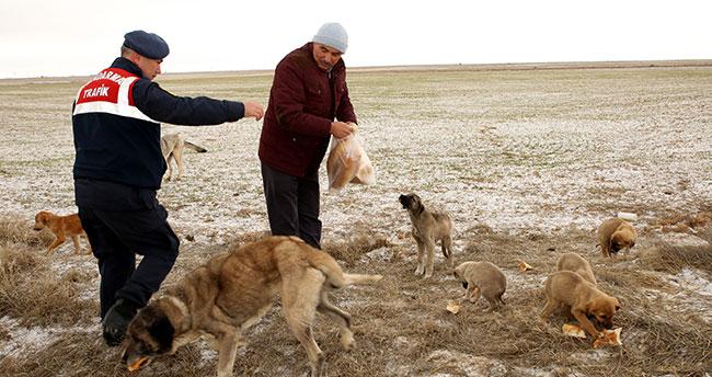 Aksaray'da yaylada ölüme terk edilen 26'sı yavru 28 köpeğe belediye sahip çıktı