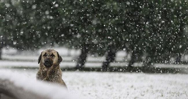 Akşam saatlerine dikkat! Konya'nın doğu ilçelerine kar geliyor
