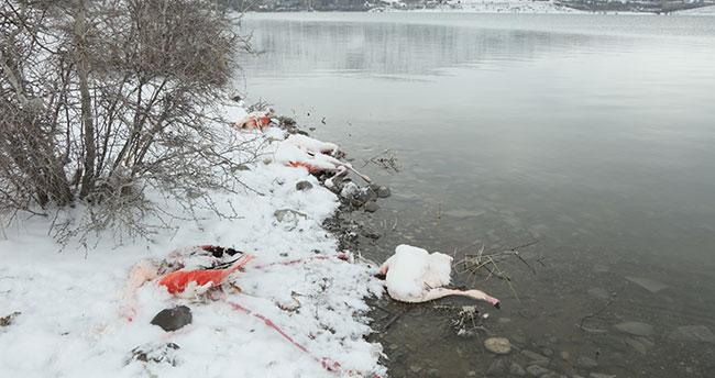 Konya'da çetin kış şartları onları da vurdu! İvriz Baraj Gölü'nde 12 flamingo öldü