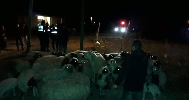 Konya'da kayıp olan 46 koyunu jandarma bulup sahibine teslim etti