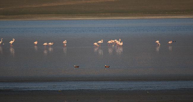 Konya'da muhteşem manzara! Düden Gölü'nün misafirleri flamingolar geldi