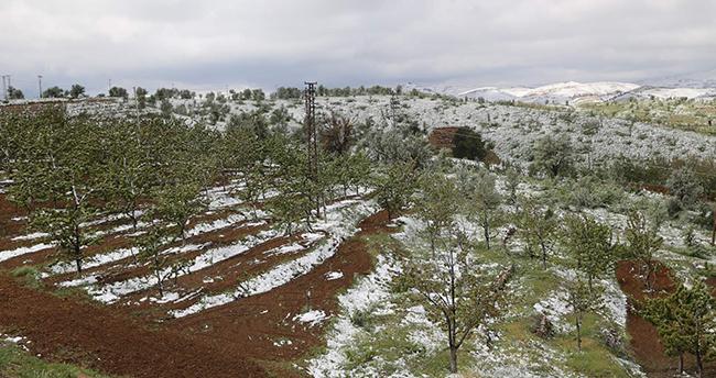 Mayıs ayında kötü sürpriz! Konya'da kiraz bahçelerini kar vurdu