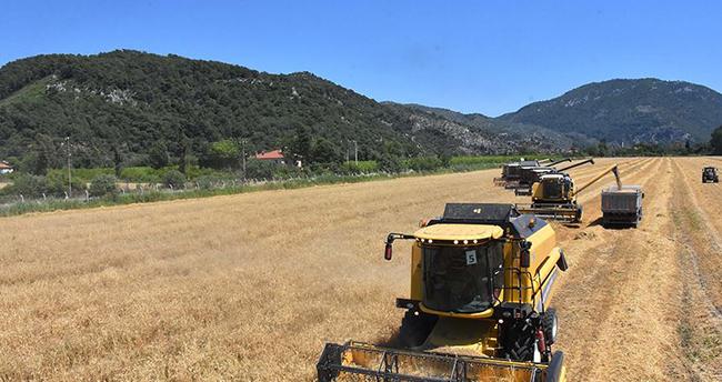 Türkiye'nin ilk buğday hasadı Dalaman TİGEM'de başladı