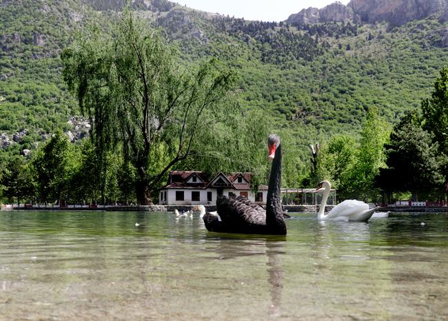 İç Anadolu'nun ortasındaki eşsiz güzellik: Kuğulu Milli Parkı