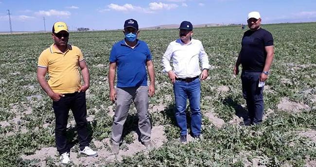 Konya'da ani hava değişiklikleri tarım arazilerine zarar verdi! Karapınar'da rüzgar ve soğuktan zarar gören alanlarda inceleme yapıldı