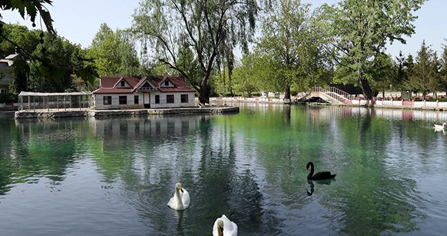 Konya'da eşsiz bir güzellik: Kuğulu Milli Parkı