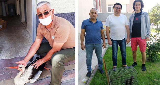 Konya'da gelincik yavrusu, yaralı flamingo ve leylek koruma altına alındı