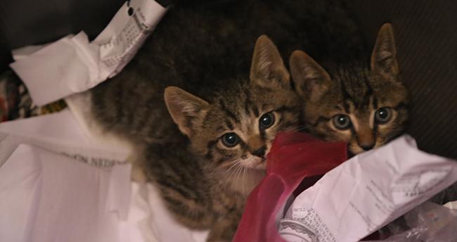 Konya'da otomobilin motor kısmında 20 kilometre giden yavru kedileri itfaiye kurtardı