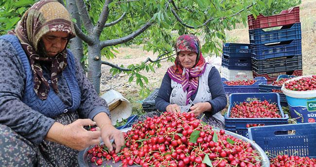 Konya'daki kiraz bahçeleri üreticinin yüzünü güldürüyor