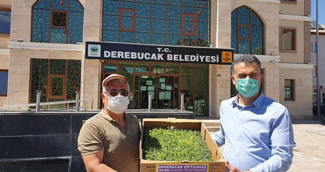 Derebucak, tıbbi aromatik üretiminde Konya'nın lideri olmayı istiyor