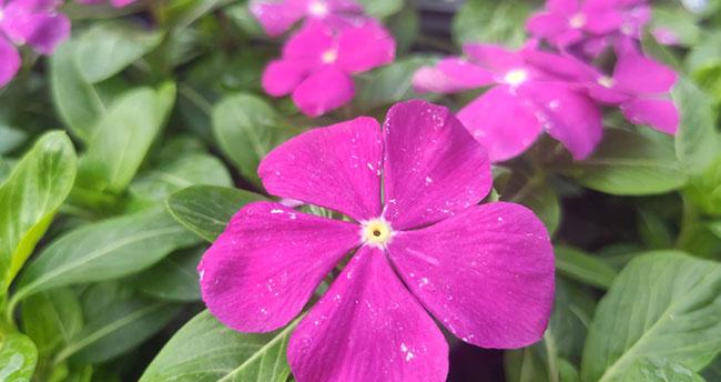 Hayatımızın rengi çiçekler…