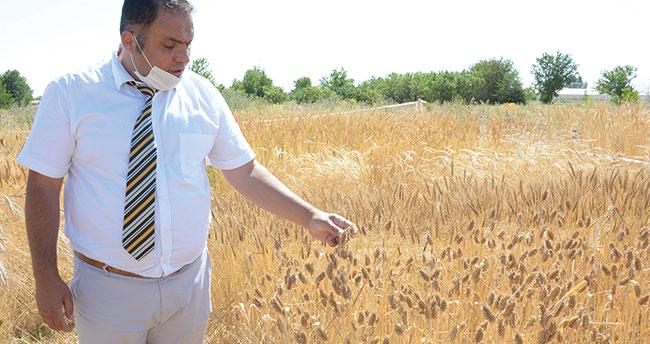 Selçuk Üniversitesi'nden yerli tohumda dev adım