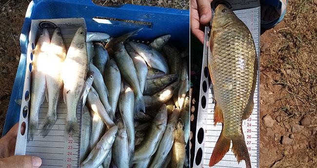 Beyşehir Gölü'nde boy limiti altında avlanmaya 10 bin lira ceza
