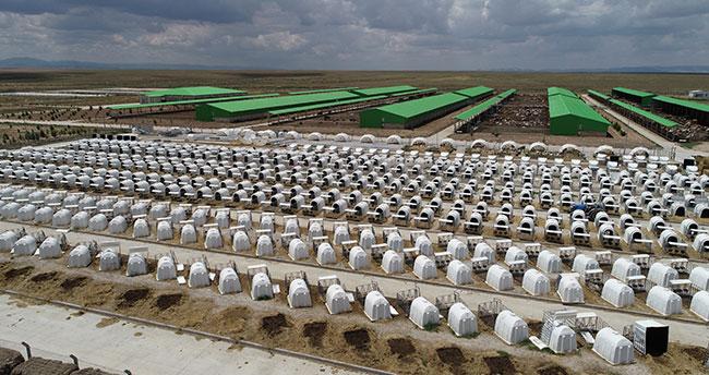 Konya'daki TİGEM Gözlü'den günde 37 ton süt üretimiyle ekonomiye katkı