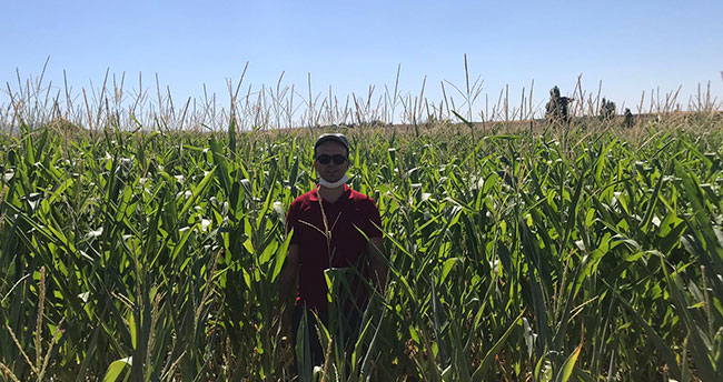 Hüyük'te danelik mısır üretimi başladı