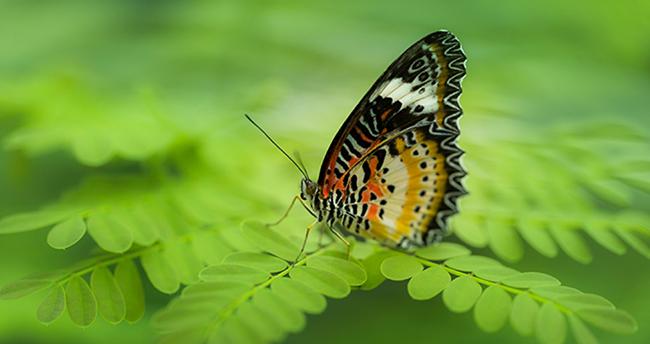 Konya'daki Tropikal Kelebek Bahçesi Türkiye'ye örnek oldu