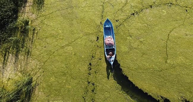 Beyşehir Gölü Milli Parkı'nda yosunlarla oluşan yeşil doku görenleri adeta büyülüyor