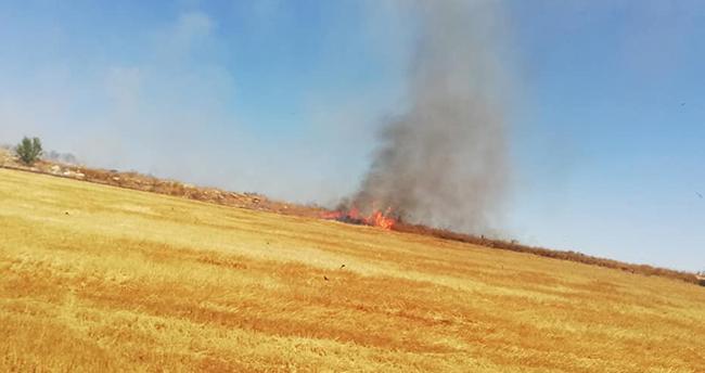 Konya'da ateşe verilen tarlalarda kaplumbağalar da yanarak can verdi